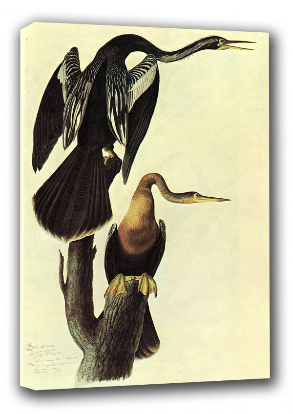 Audubon, John James: Anhinga. (Ornothology/Bird) Fine Art Canvas. Sizes: A3/A2/A1 (00661)